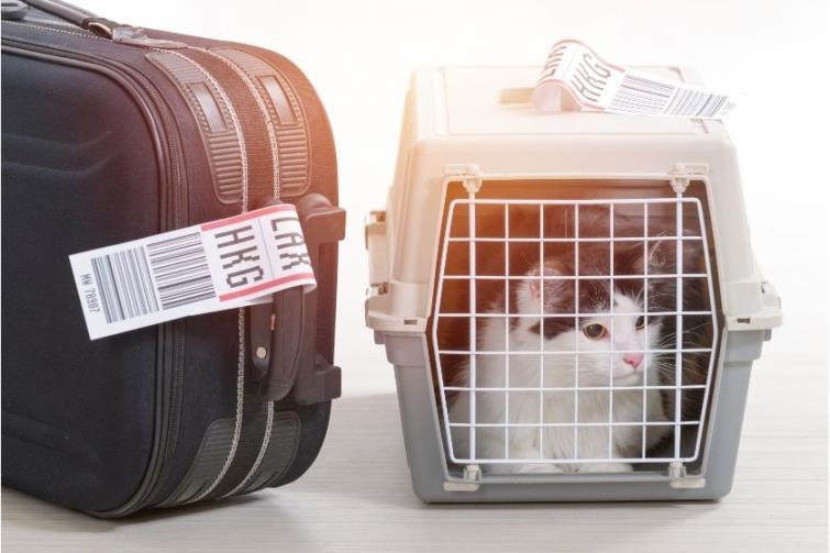 Evcil Hayvan Taşıma Tedbirleri Hakkında